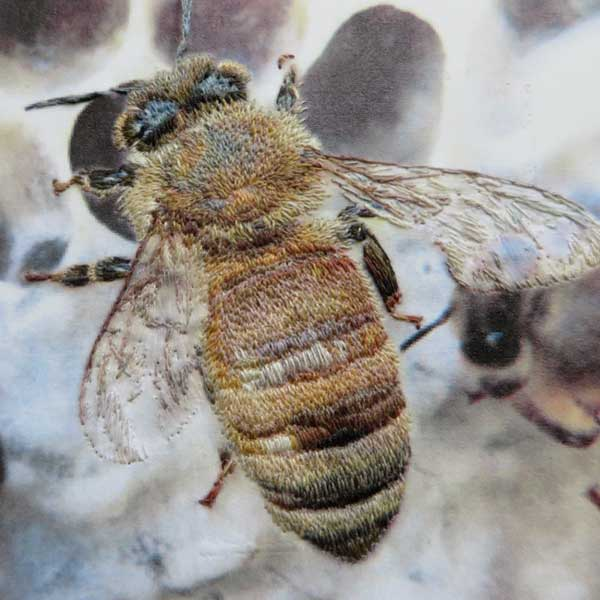 image of one bee close up